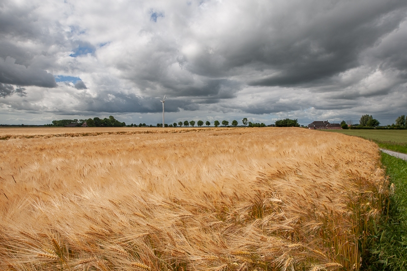Reiderland 22.06.2014 (Canon EF 16-35mm f/2.8L II USM)