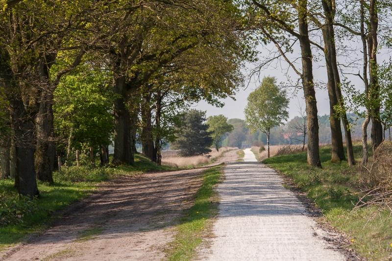 Dwingeloose Heide 25.04.2009 (Sigma 150-500mm f/5-6.3 APO DG OS)