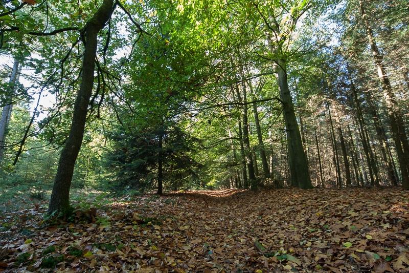 Boswachterij Gieten 17.10.2010 (Sigma 12-24mm f/4.0 DG HSM)