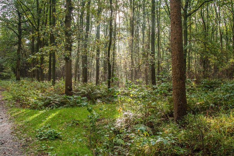 Mensingebos 13.10.2012 (Canon EF 24-105mm f/4L IS USM)