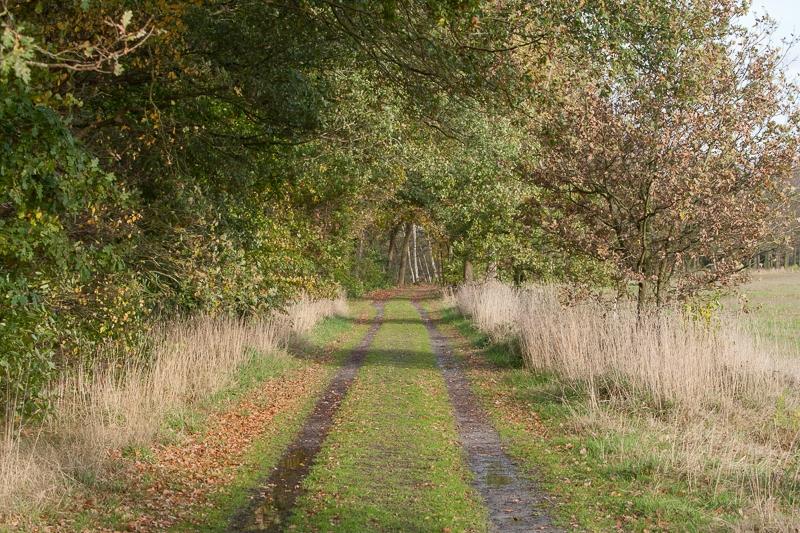 Oudemolense Veld 02.11.2012 (Canon EF 70-200mm f/2.8L IS USM)