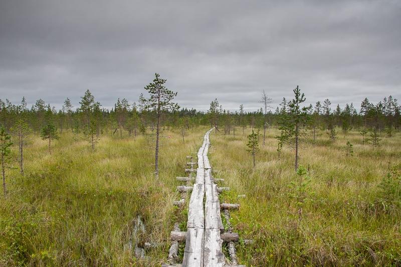Kurtakko 09.08.2010 (Canon EF 24-105mm f/4.0L IS)
