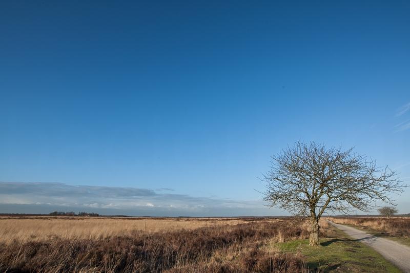 16.01.2015 (Canon EF 16-35mm f/2.8L II USM)