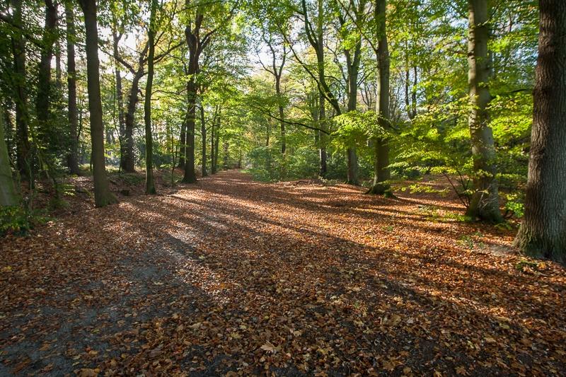 Ontwijk, Friese Wouden 28.10.2012 (Canon EF 16-35mm f/2.8L II USM)