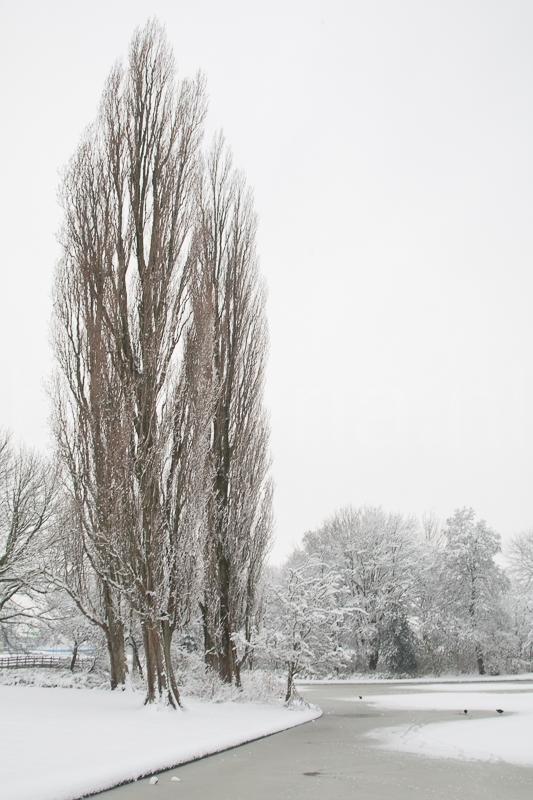 Adriaan van Ostadestraat , Groningen 17.12.2009 (Canon EF 24-105mm f/4.0L IS USM)
