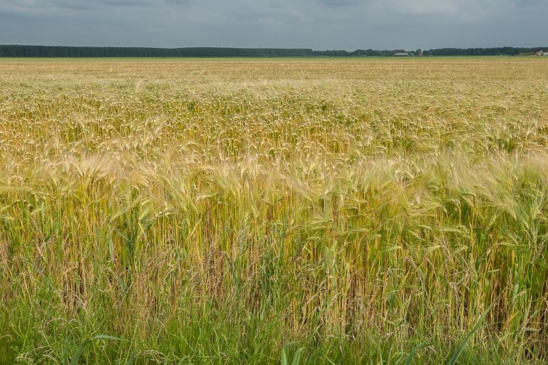 Pastorieweg, Nieuw Scheemda 05.07.2013 (Canon EF 16-35mm f/2.8L II USM)