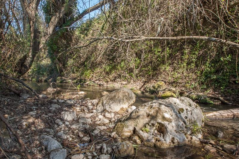 El Bosque 25.02.2012  (Canon EF 16-35mm f/2.8L II USM)