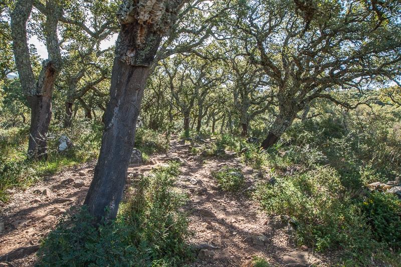 Sendero Subida Al Aljibe 06.03.2012 (Canon EF 16-35mm f/2.8L II USM)