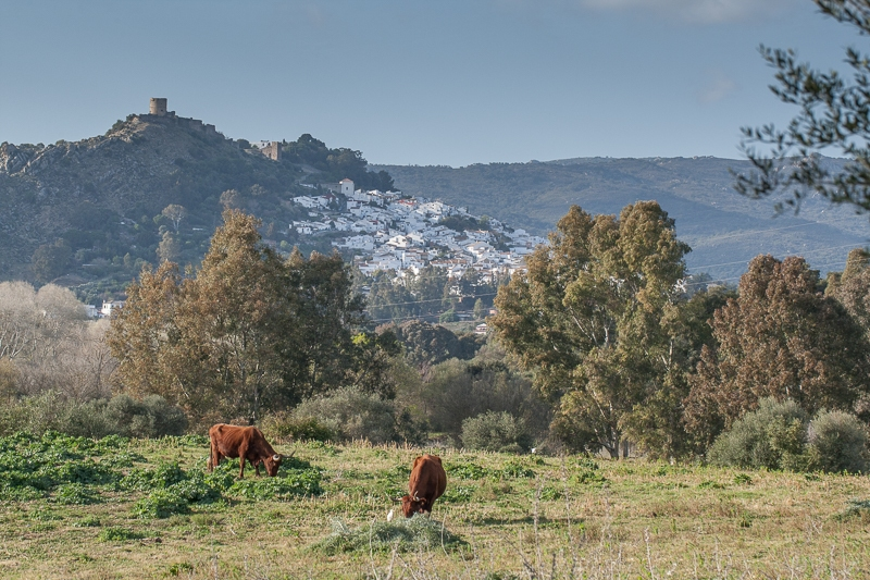 Jimena de la Frontera 09.03.2012 (Canon EF 100mm f/2.8L Macro IS USM)