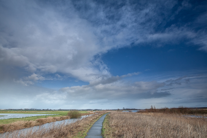 Westerpolder 29.01.2015 (Canon EF 16-35mm f/2.8L II USM)