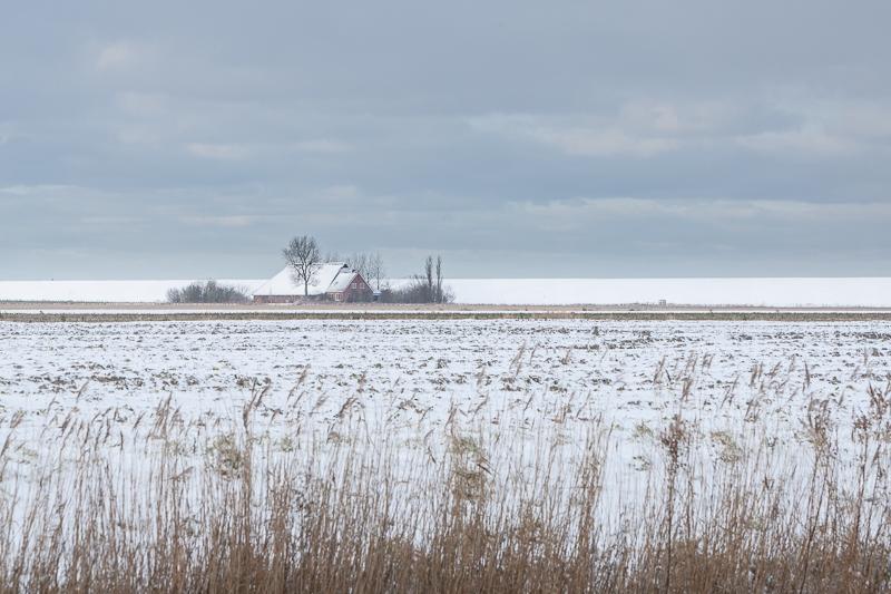 Noordpolder 06.12.2012 (Canon EF 70-200mm f/2.8L IS USM)
