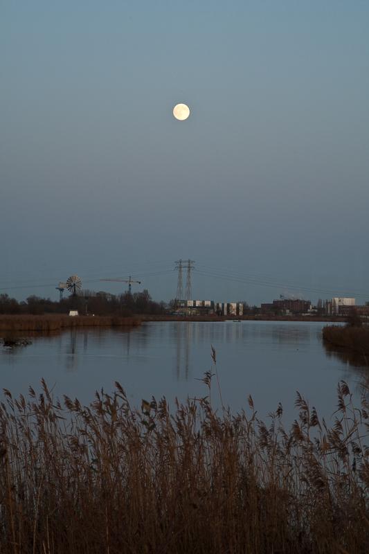 Westerbroekstermadepolder 01.12.2009 (Canon EF 24-105mm f/4L IS USM)