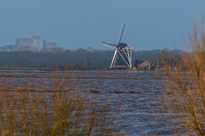 Westerbroekstermadepolder 08.01.2012 (Canon EF 300mm f/4L IS USM + Canon EF 1.4x II Extender)