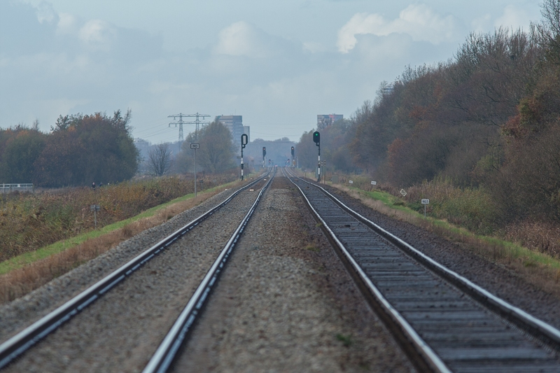 Westerbroekstermadepolder 18.11.2012 (Canon EF 300mm f/4L IS USM + Canon EF 1.4x II Extender)