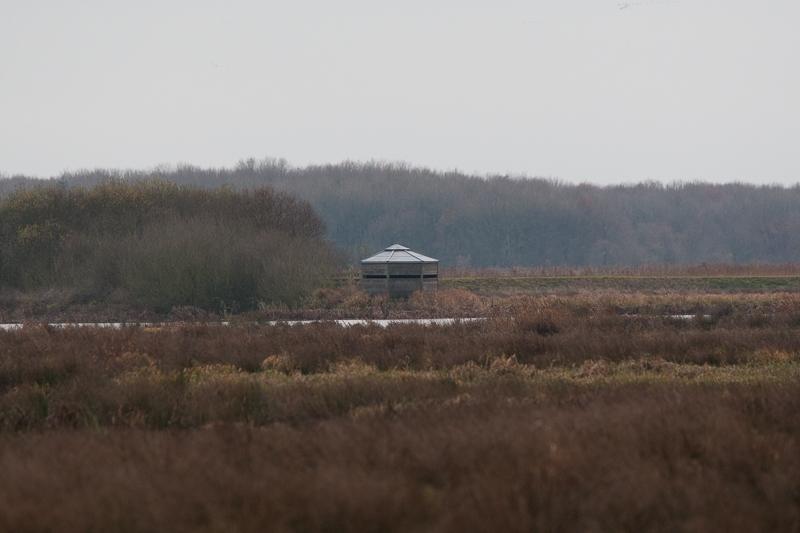 Westerbroekstermadepolder 01.12.2012 (Canon EF 300mm f/2.8L IS USM + Canon EF 1.4x II Extender)